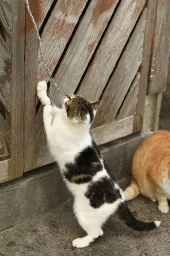 灯台猫たち2020.01.17(1)_e0414191_07235370.jpg