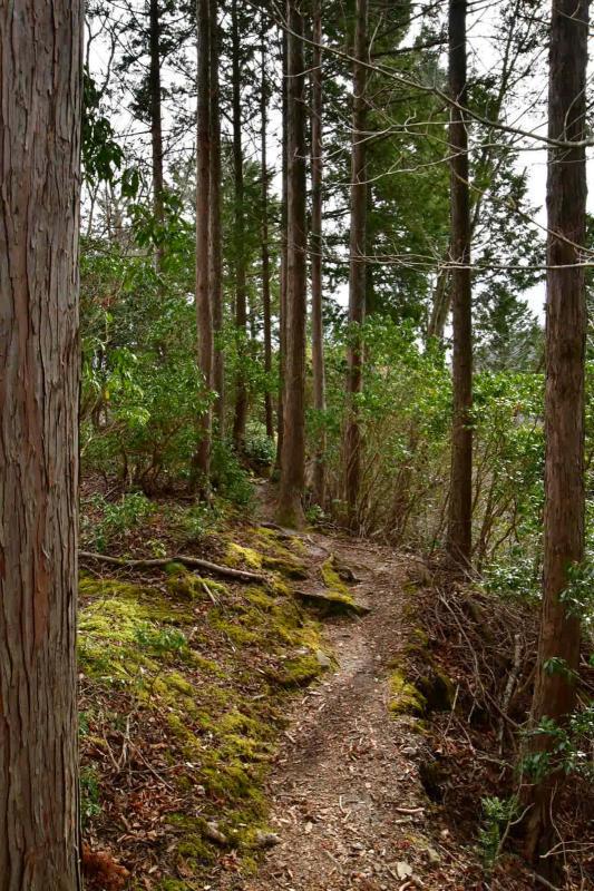 Nishi-Tan Roundwalk その7_b0223512_22404185.jpg