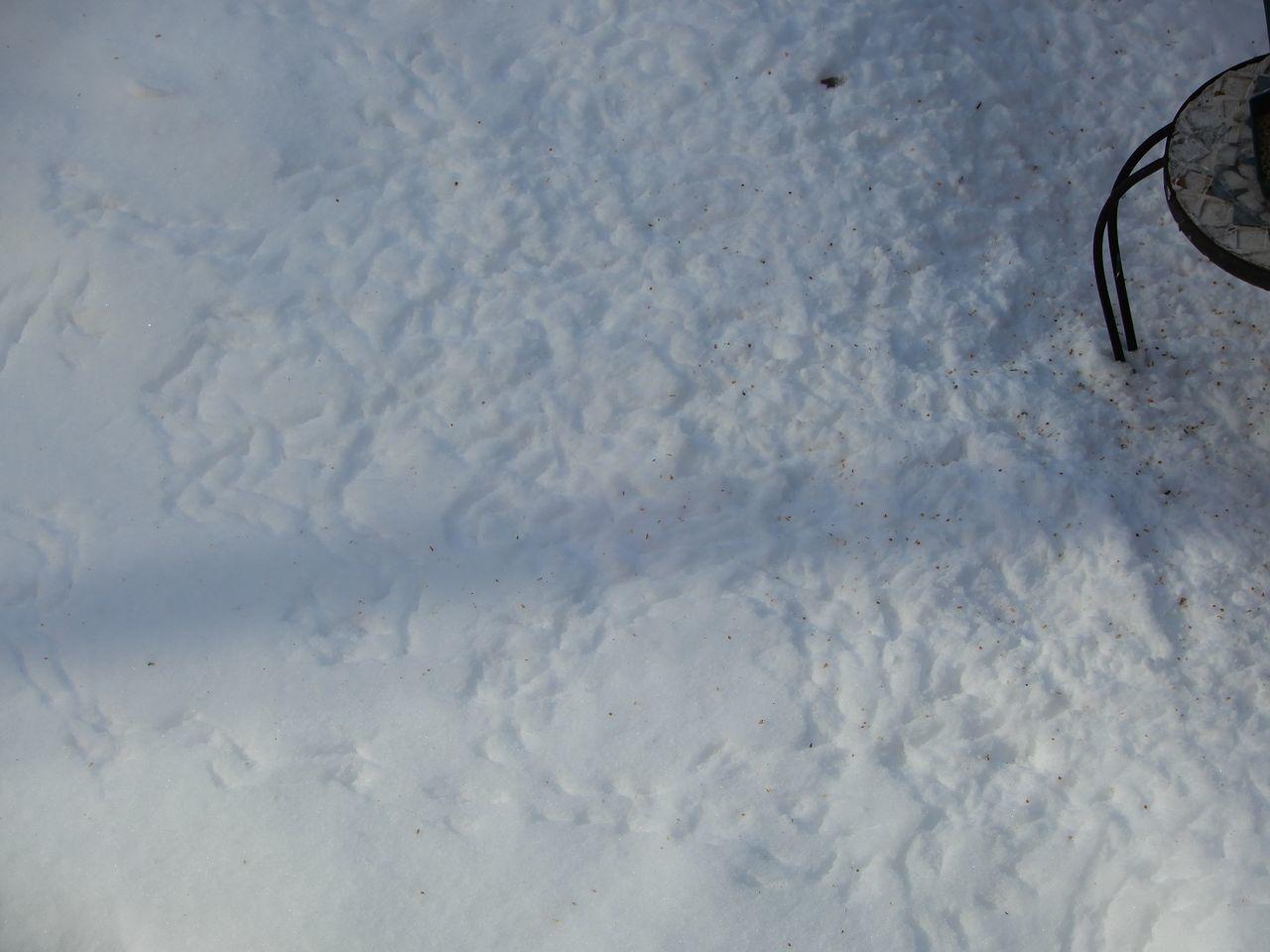 この冬一番の寒さ_c0025115_22134222.jpg