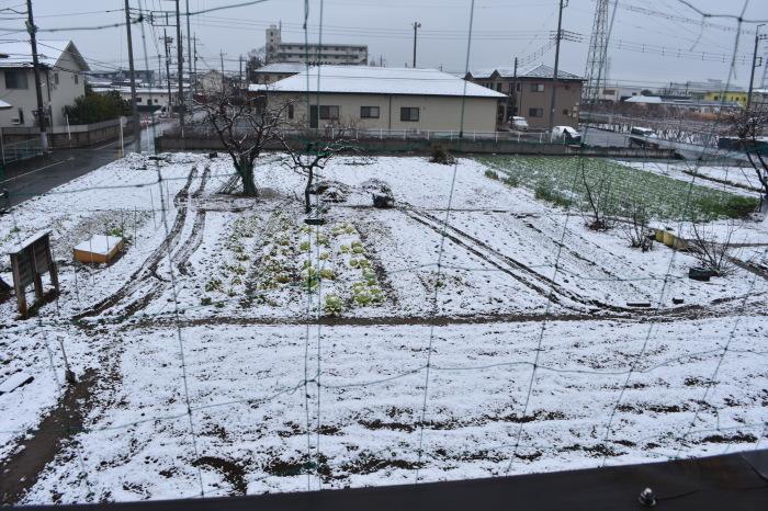 雪になりました。_f0189218_11170502.jpg