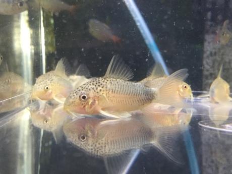 200130 熱帯魚 めだか 水草_f0189122_12231576.jpeg