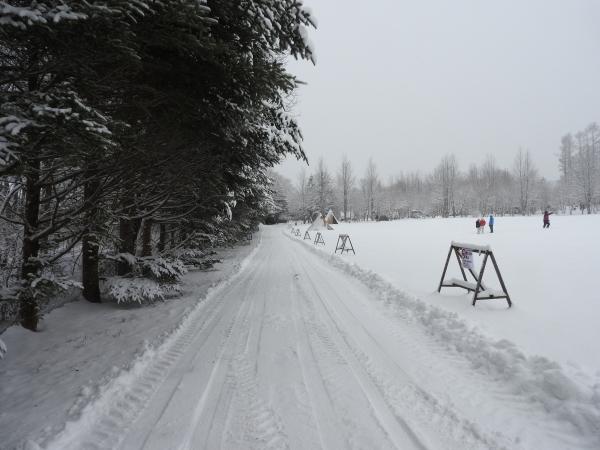 雪が降りました!天気予報、道路状況最新をチェックして(2020年1月28日)_b0174425_11125652.jpg