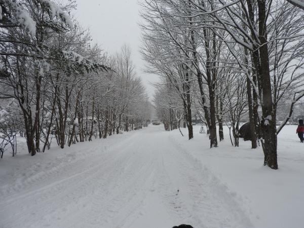 雪が降りました!天気予報、道路状況最新をチェックして(2020年1月28日)_b0174425_11130451.jpg