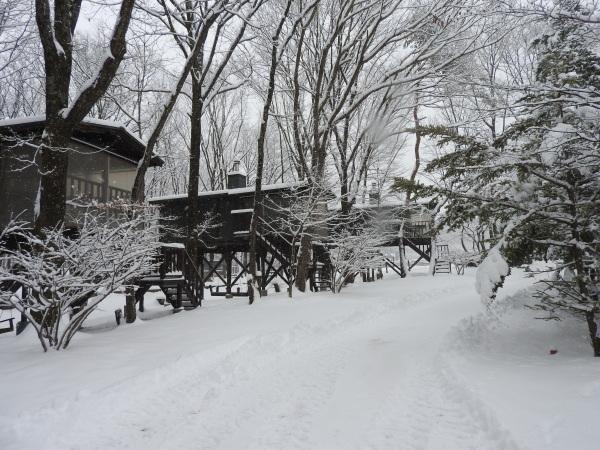 雪が降りました!天気予報、道路状況最新をチェックして(2020年1月28日)_b0174425_11130961.jpg