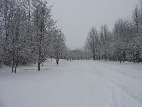 雪が降りました!天気予報、道路状況最新をチェックして(2020年1月28日)_b0174425_11135440.jpg