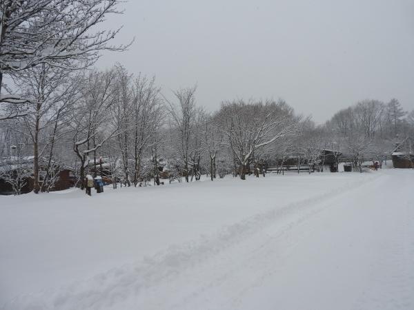 雪が降りました!天気予報、道路状況最新をチェックして(2020年1月28日)_b0174425_11141634.jpg