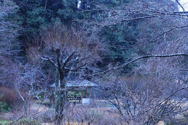 外国人、茶道・箏、尺八を鑑賞_e0321325_12051267.jpg