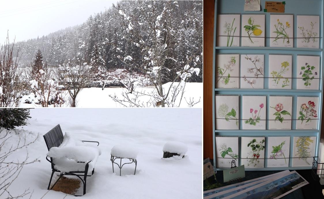 雪が積もった庭に_a0212730_18225172.jpg