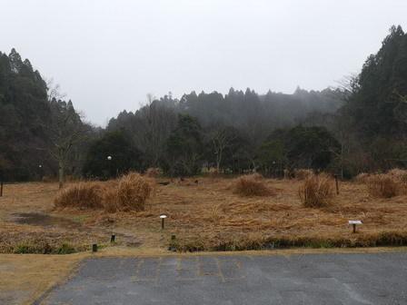 雨の日のカラス_a0123836_16343214.jpg