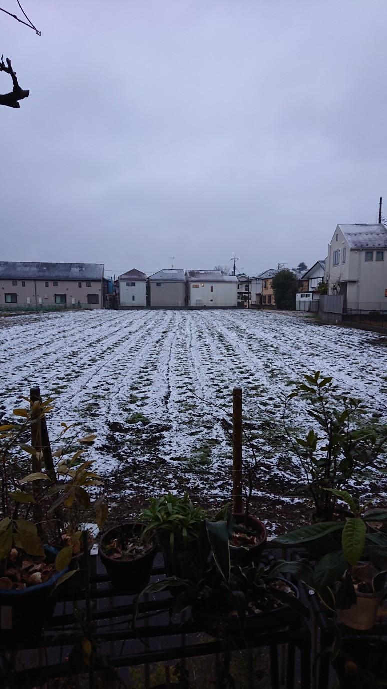 雪にならなくて良かった_d0155439_11552337.jpg