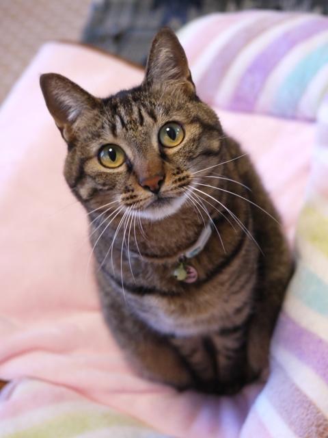 猫のお留守番 ゆずちゃん編。_a0143140_22081271.jpg