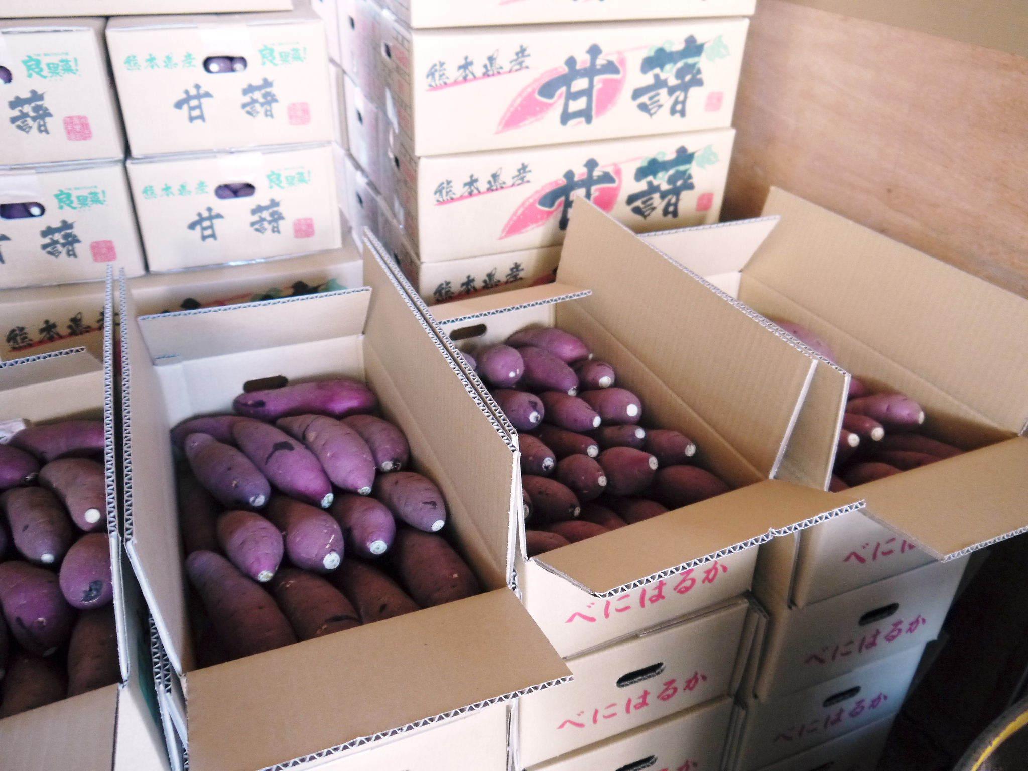 熊本産大津甘藷『からいも(サツマイモ)』の販売に向け、生産農家を現地取材(後編)_a0254656_18465086.jpg