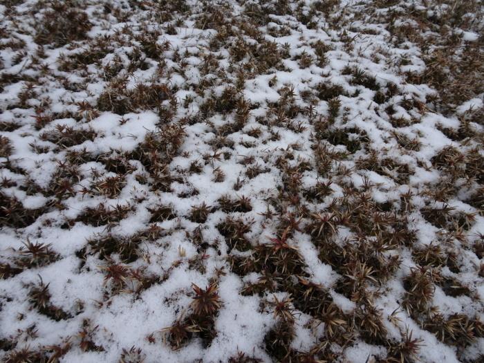 今朝の雪_d0122374_08522893.jpg