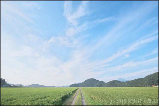 御苗場 Vol.20 横浜 惠み_a0020184_16520912.jpg