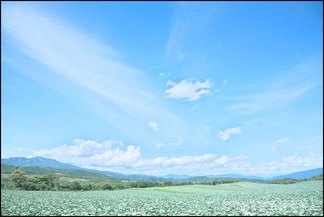 御苗場 Vol.20 横浜 惠み_a0020184_16521255.jpg