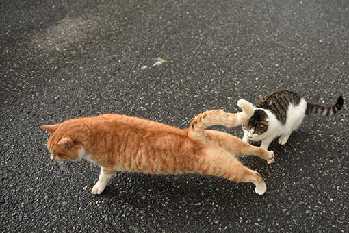 灯台猫たち2020.01.17(2)_e0414191_06245616.jpg