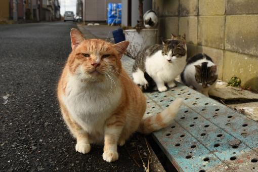 灯台猫たち2020.01.17(2)_e0414191_06250210.jpg