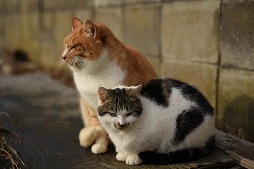 灯台猫たち2020.01.17(2)_e0414191_06250806.jpg