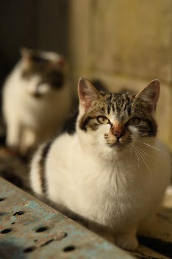 灯台猫たち2020.01.17(2)_e0414191_06251405.jpg