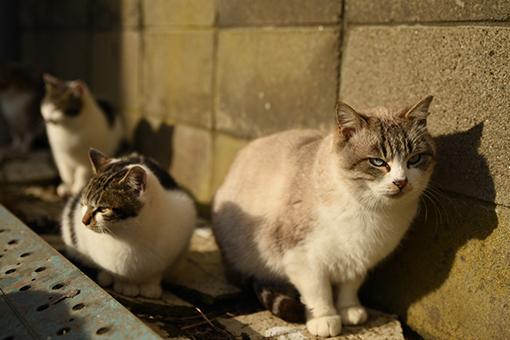 灯台猫たち2020.01.17(2)_e0414191_06252092.jpg