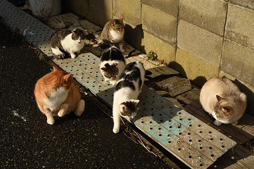灯台猫たち2020.01.17(2)_e0414191_06252501.jpg