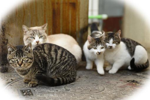 灯台猫たち2020.01.17(2)_e0414191_12115801.jpeg
