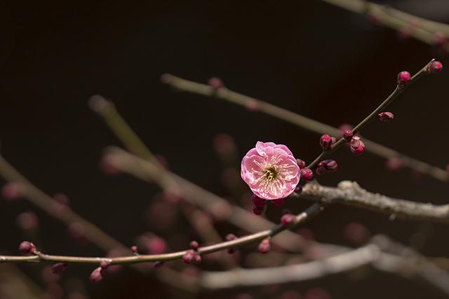 鎌倉散歩 海蔵寺_b0145398_16241104.jpg
