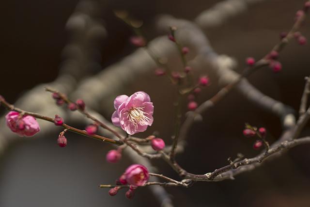 鎌倉散歩 海蔵寺_b0145398_16244264.jpg