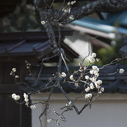 鎌倉散歩 海蔵寺_b0145398_16262232.jpg