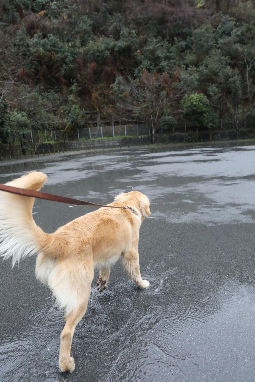 雨の珍道中_b0275998_09012679.jpg