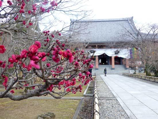 梅の開花が早い 智積院_e0048413_20373972.jpg