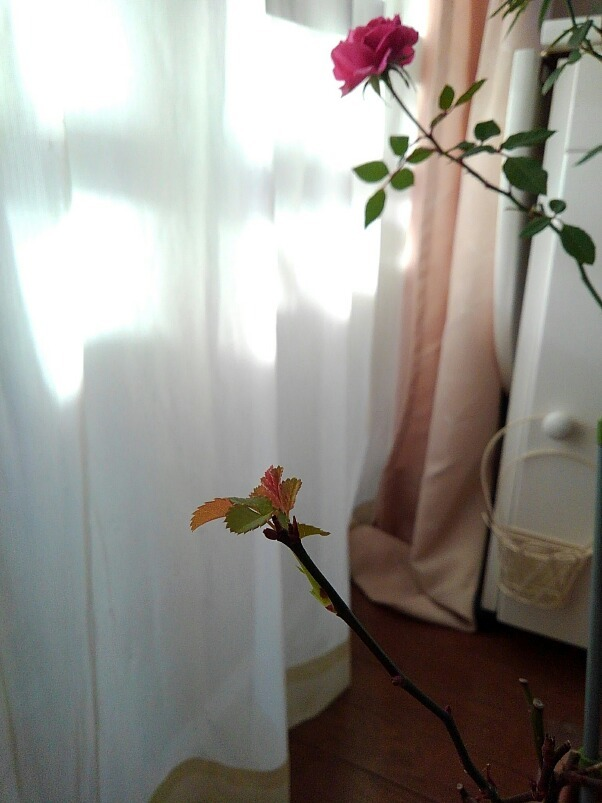 春来ちゃった_d0152937_08020844.jpg