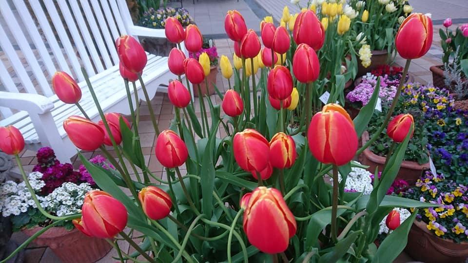 久屋大通庭園フラリエさんにて演奏させて頂きます!_f0373339_11495794.jpg