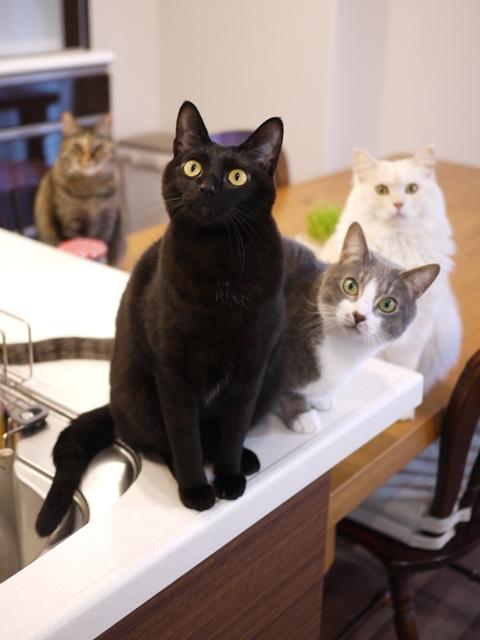 猫のお留守番 天ちゃん麦くん茶くん〇くんAoiちゃん編。_a0143140_20463282.jpg