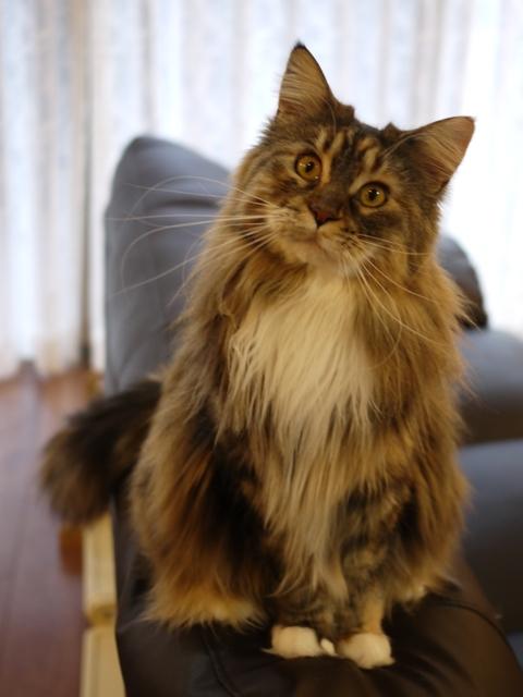 猫のお留守番 天ちゃん麦くん茶くん〇くんAoiちゃん編。_a0143140_20465911.jpg