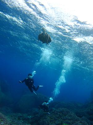 碧い海とカメに、大興奮の10人でした\(^o^)/_b0189640_11382083.jpg