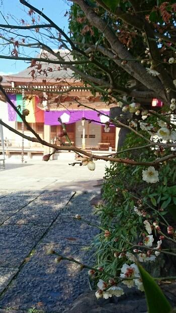 東覚寺さん 梅が咲きました_d0256145_19451591.jpg