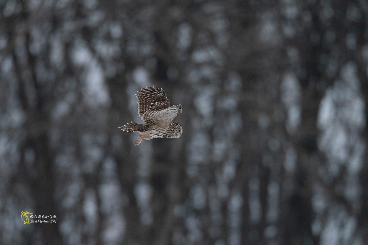 フクロウが飛ぶ時_d0360547_07044918.jpg