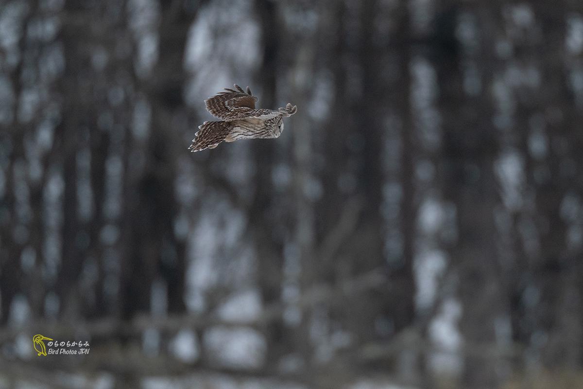 フクロウが飛ぶ時_d0360547_07044933.jpg