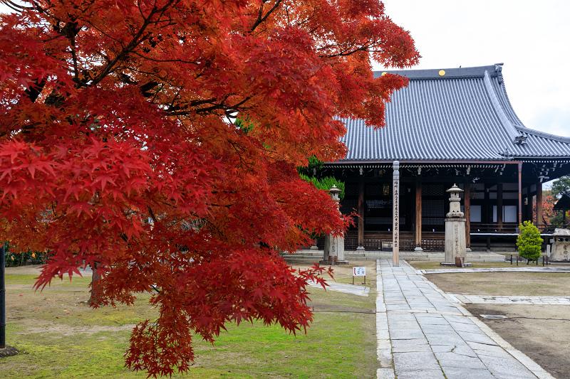 紅葉が彩る京都2019 秋色の妙顕寺_f0155048_23524731.jpg