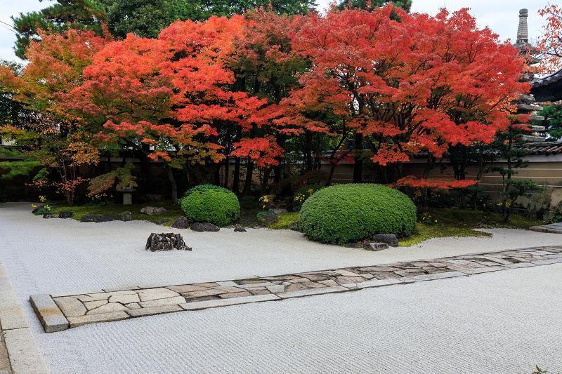 紅葉が彩る京都2019 秋色の妙顕寺_f0155048_23544574.jpg