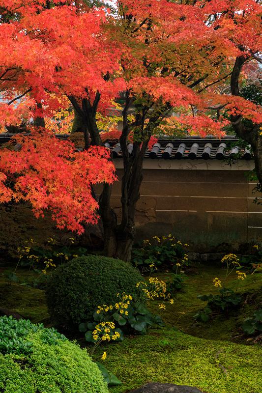 紅葉が彩る京都2019 秋色の妙顕寺_f0155048_23545092.jpg