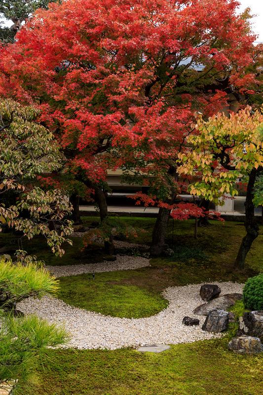 紅葉が彩る京都2019 秋色の妙顕寺_f0155048_23565145.jpg
