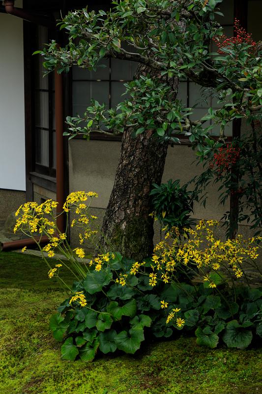 紅葉が彩る京都2019 秋色の妙顕寺_f0155048_23573259.jpg