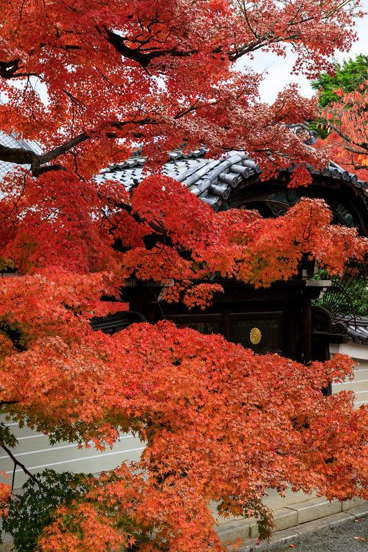 紅葉が彩る京都2019 秋色の妙顕寺_f0155048_2358203.jpg