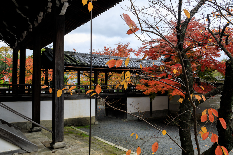 紅葉が彩る京都2019 秋色の妙顕寺_f0155048_23583672.jpg