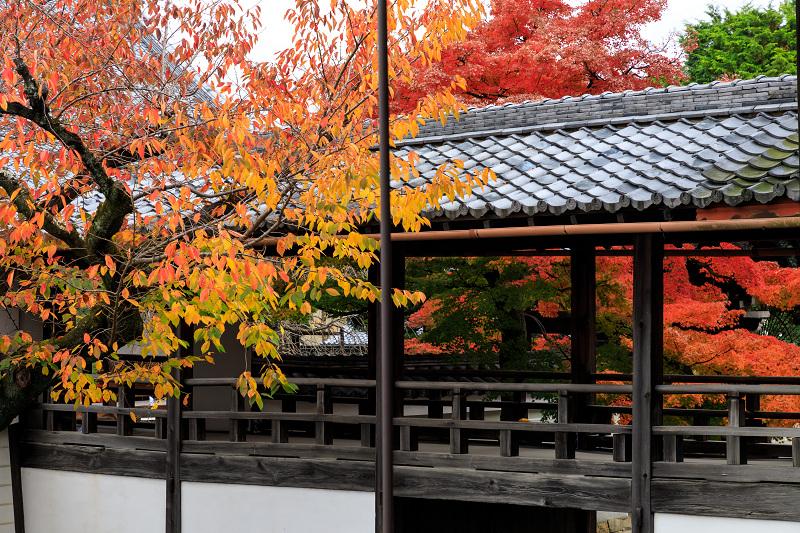 紅葉が彩る京都2019 秋色の妙顕寺_f0155048_23595854.jpg