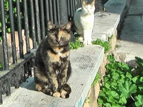 アテネのローマン・アゴラの猫たち_f0037264_19123511.jpg