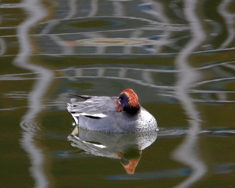 雨が降る前に 三ツ寺公園で鳥撮り_c0305565_17334348.jpg