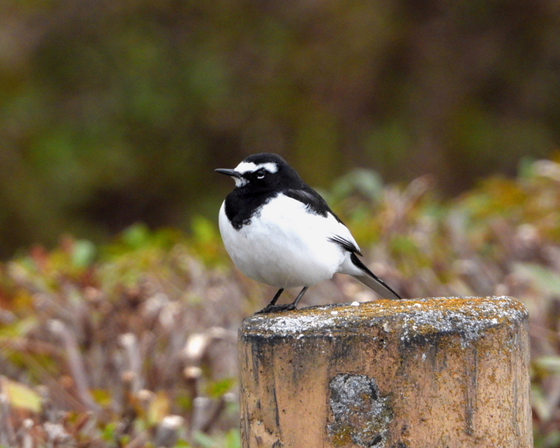 雨が降る前に 三ツ寺公園で鳥撮り_c0305565_17405373.jpg